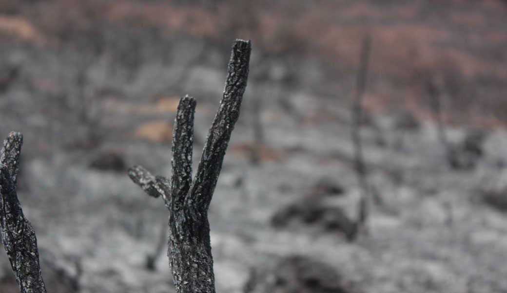 לבעלי החיים הקטנים לא היה סיכוי: כשעפיפון תבערה שורף שמורת טבע
